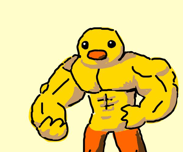 A buff duck