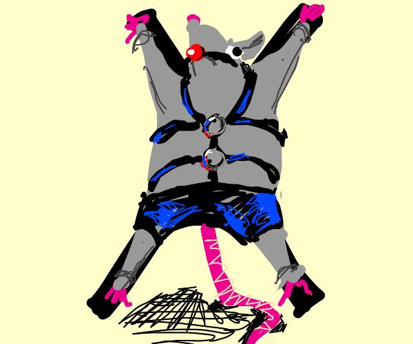 BDSM rat in shorts