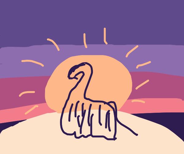 Beautiful llama loves beautiful sunsets
