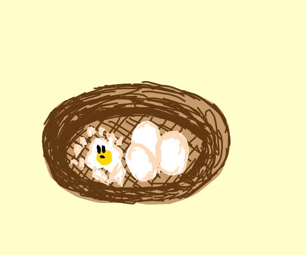 A nest with the yolk