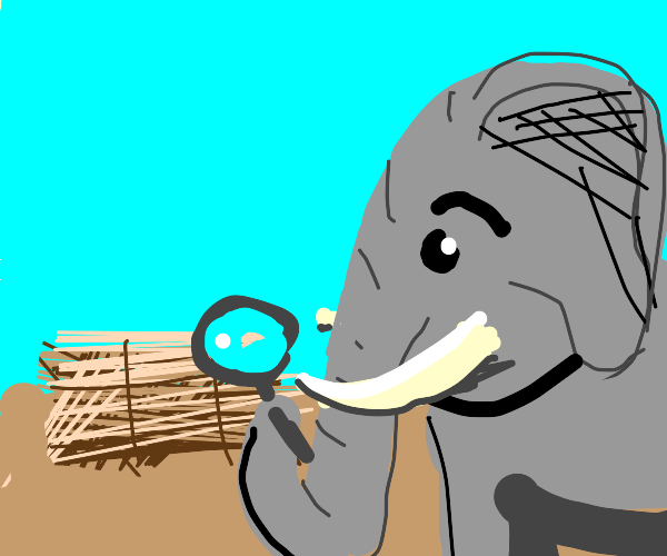 Elephant inspects a bale of hay