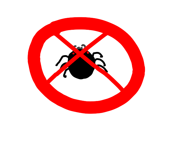 no spiders