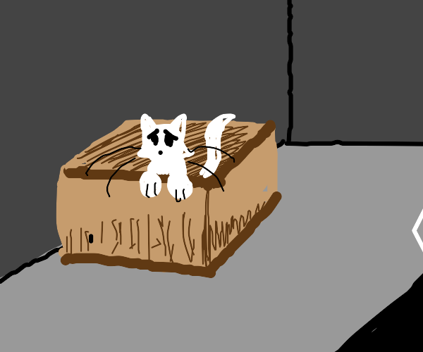 please.. help the lil' kitty in a box