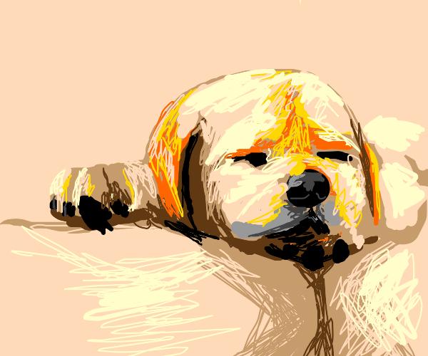 Sleeping doggo