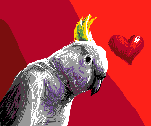 Cockatoo in love