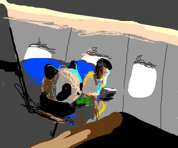 A panda on a plane