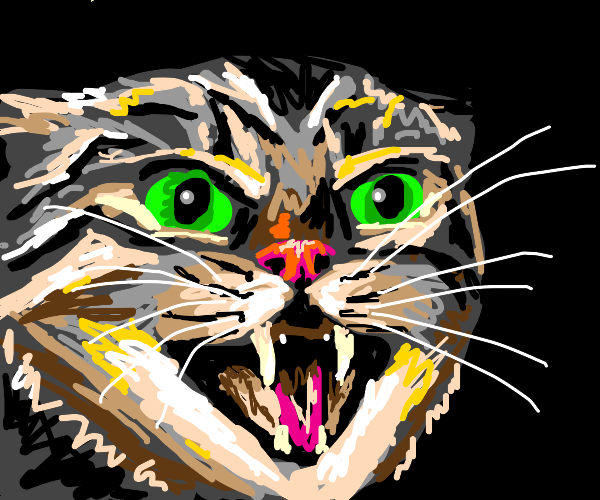 Feisty cat hisses at you