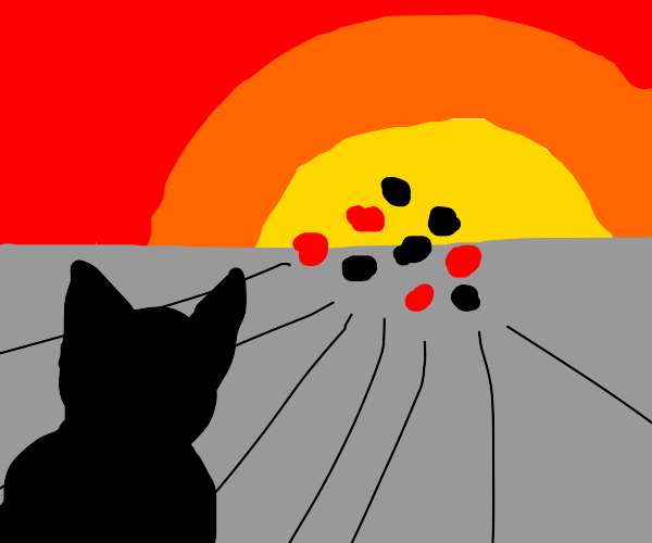 Cat watches poker chips sail into the sunset