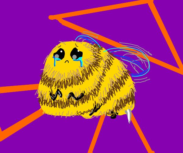 Sad bee is sad