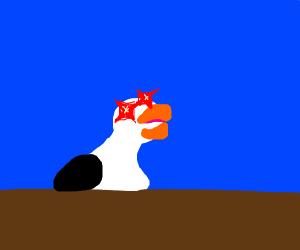 Laughing Seagull meme
