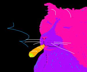 Purple cat smokes weed