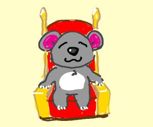 a koala in a chair