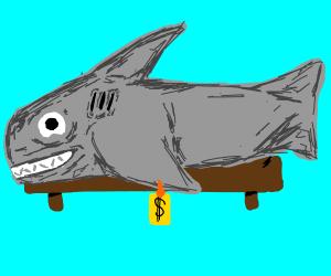 Shark for sale