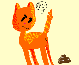 cat says no to poo