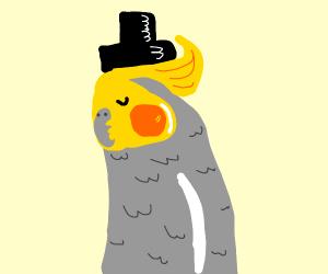 Cockatiel wearing a top hat.