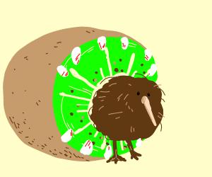 kiwi (fruit) eating a kiwi (bird)