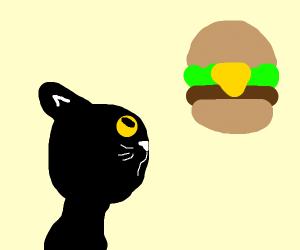 cat looking at floating hamburger sadly