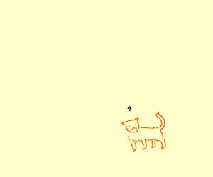 orange cat is confused