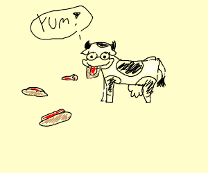 a non vegan cow