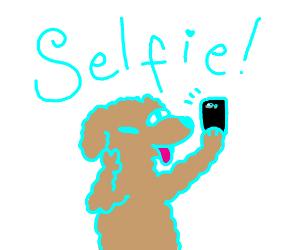 Dog taking selfie