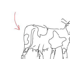 cows butt
