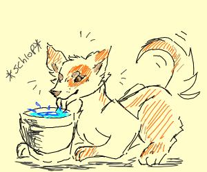 Dog Schlops Water from Bucket