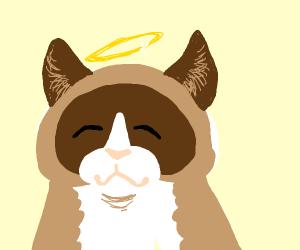 Grumpy Cat (We miss you Tartar)