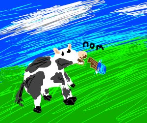 Cow eats chocolate bar