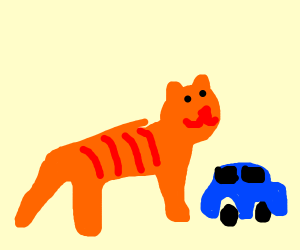 Skinny cat playing with cars
