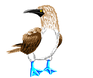 Blue-footed Booby (It's a bird)