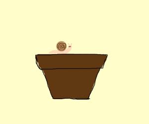 Snail on flower pot