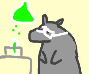 Hippo chemist