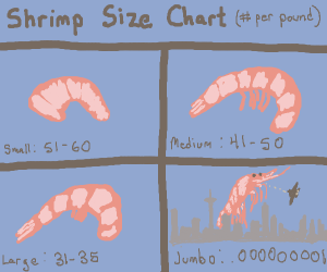 4 different sizes of shrimp