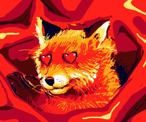 Fox in a red blanket falls in love