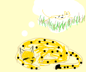 Cheetah Dreaming