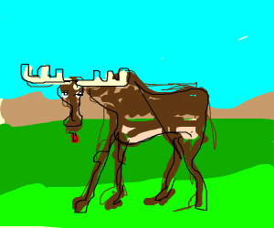 The derpy moose