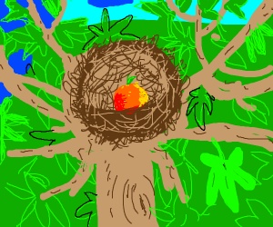 orange in a bird's nest