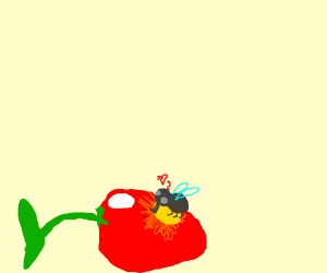 A fly lands on a cherry and loves it