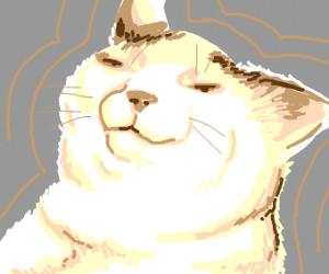 a happy, smug cat