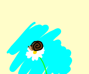 snail on a daisy