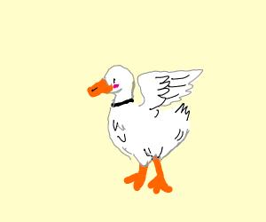 Cute white duck