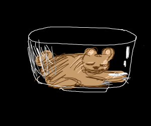 bear in a bowl