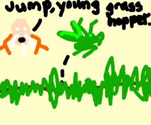 Grasshopper mid-hop