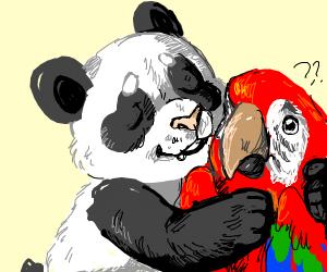 Panda hugging parrot (Macaw)