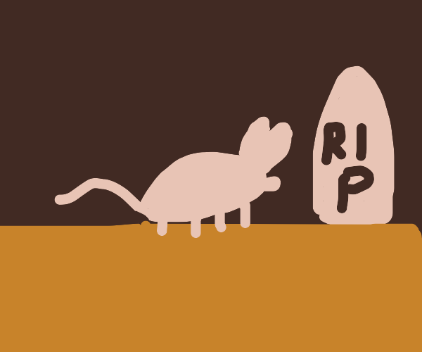 rest in peace this tiny mouse...