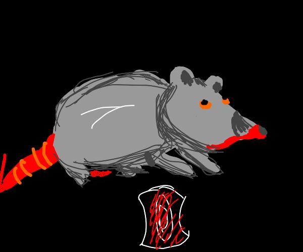 P E R I O D  rat