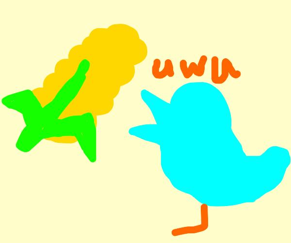 bird saying uwu to a corn cob