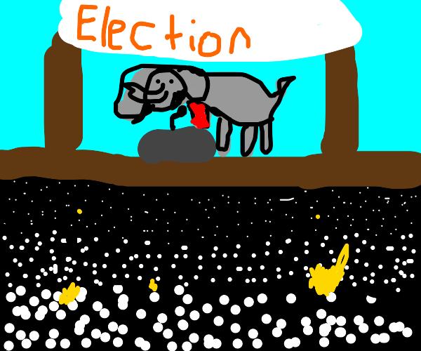 Elephant won the election