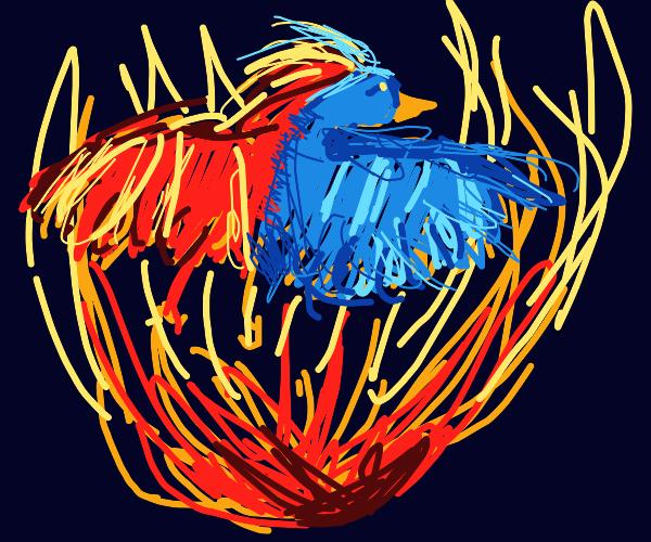 fire and ice phoenix