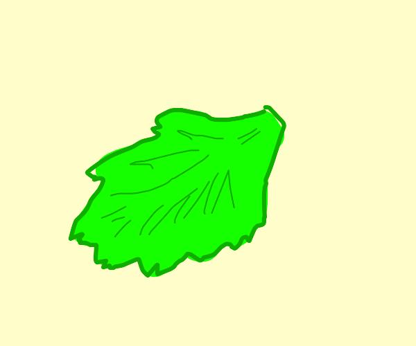 single lettuce leaf